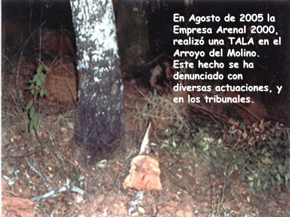 En Agosto de 2005 la Empresa Arenal 2000, realizó una TALA en el Arroyo del Molino. Este hecho se ha denunciado con diversas actuaciones, y en los tri