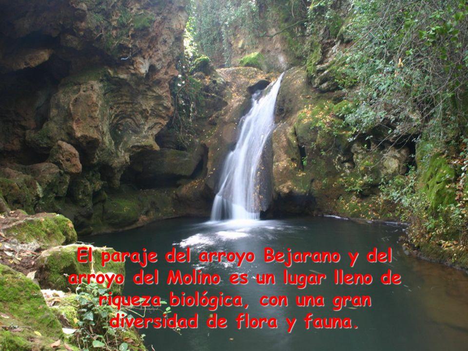 El paraje del arroyo Bejarano y del arroyo del Molino es un lugar lleno de riqueza biológica, con una gran diversidad de flora y fauna.