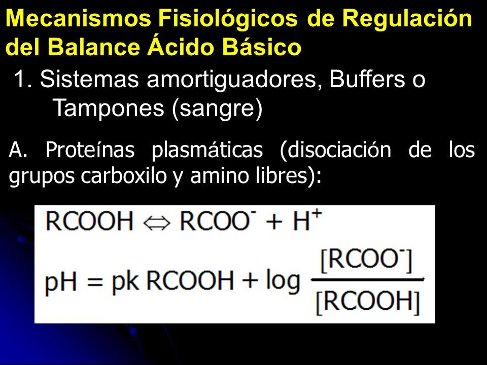 Mecanismos Fisiológicos de Regulación del Balance Ácido Básico 1. Sistemas amortiguadores, Buffers o Tampones (sangre) A. Prote í nas plasm á ticas (d