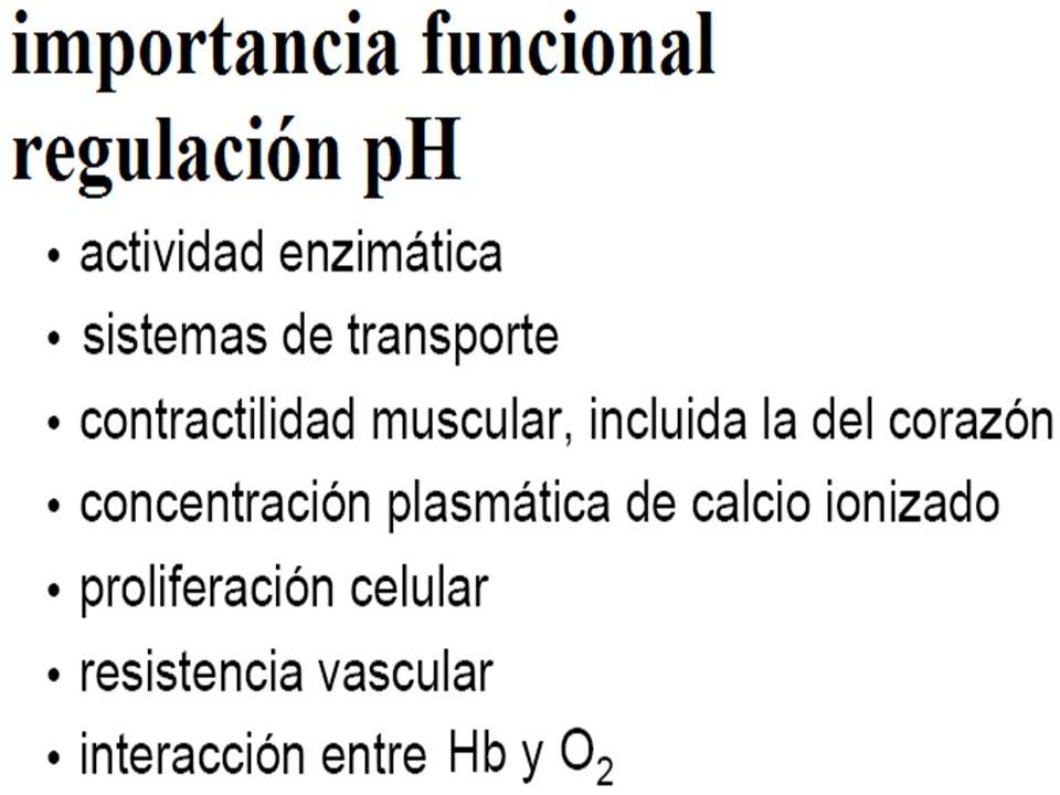 Mecanismos Fisiológicos de Regulación del Balance Ácido Básico CO 2 + H 2 O H 2 CO 3 H + + HCO 3 - Respiratorio Renal 2.