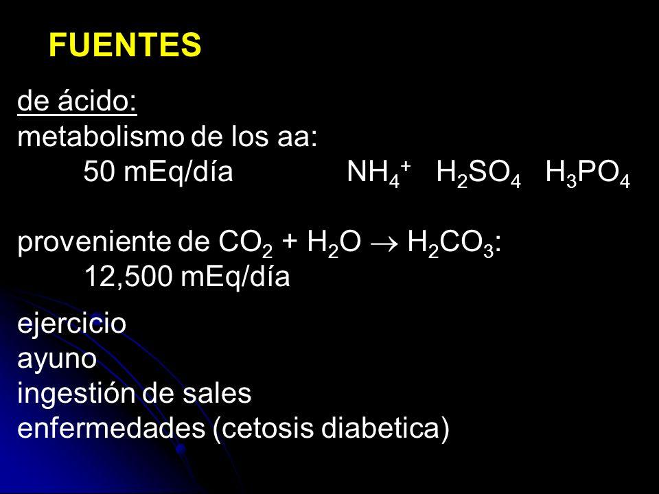 FUENTES de ácido: metabolismo de los aa: 50 mEq/díaNH 4 + H 2 SO 4 H 3 PO 4 proveniente de CO 2 + H 2 O H 2 CO 3 : 12,500 mEq/día ejercicio ayuno ingestión de sales enfermedades (cetosis diabetica)