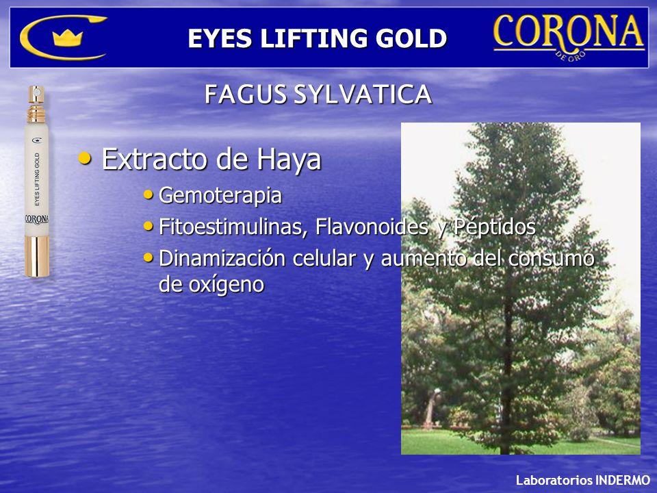 Laboratorios INDERMO EYES LIFTING GOLD FAGUS SYLVATICA Extracto de Haya Extracto de Haya Gemoterapia Gemoterapia Fitoestimulinas, Flavonoides y Péptid