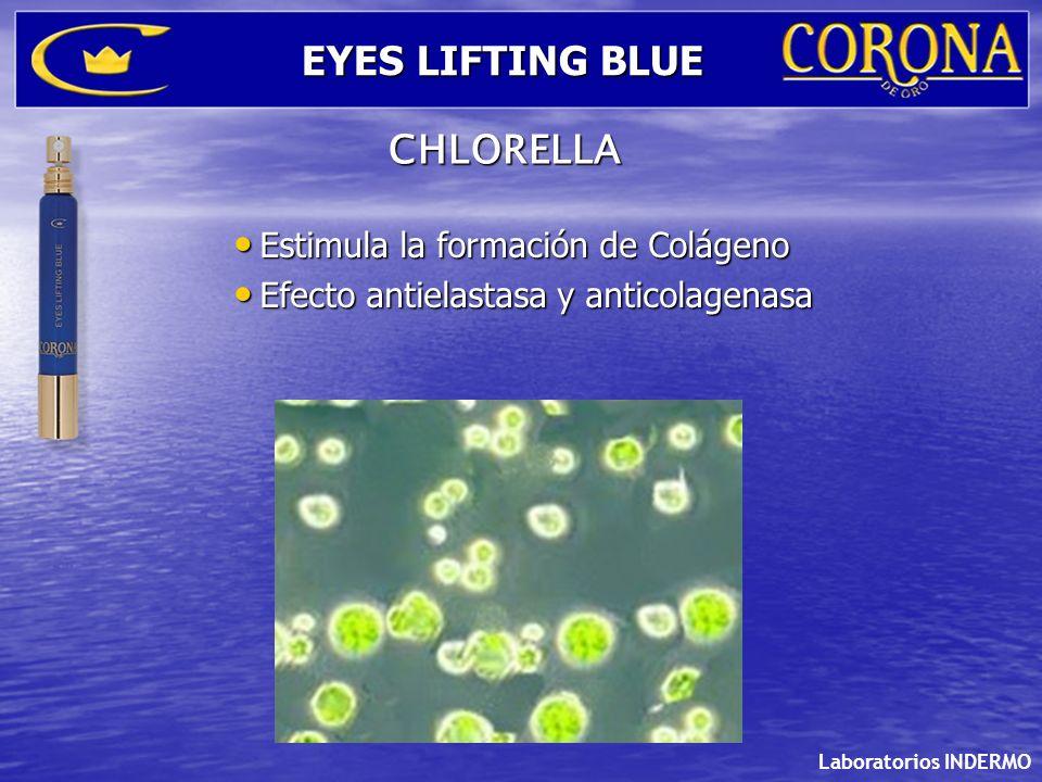 Estimula la formación de Colágeno Estimula la formación de Colágeno Efecto antielastasa y anticolagenasa Efecto antielastasa y anticolagenasa Laborato