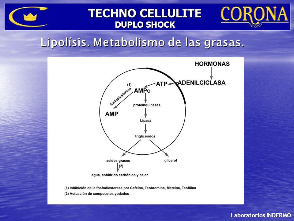 Laboratorios INDERMO TECHNO CELLULITE DUPLO SHOCK Componentes del Pack