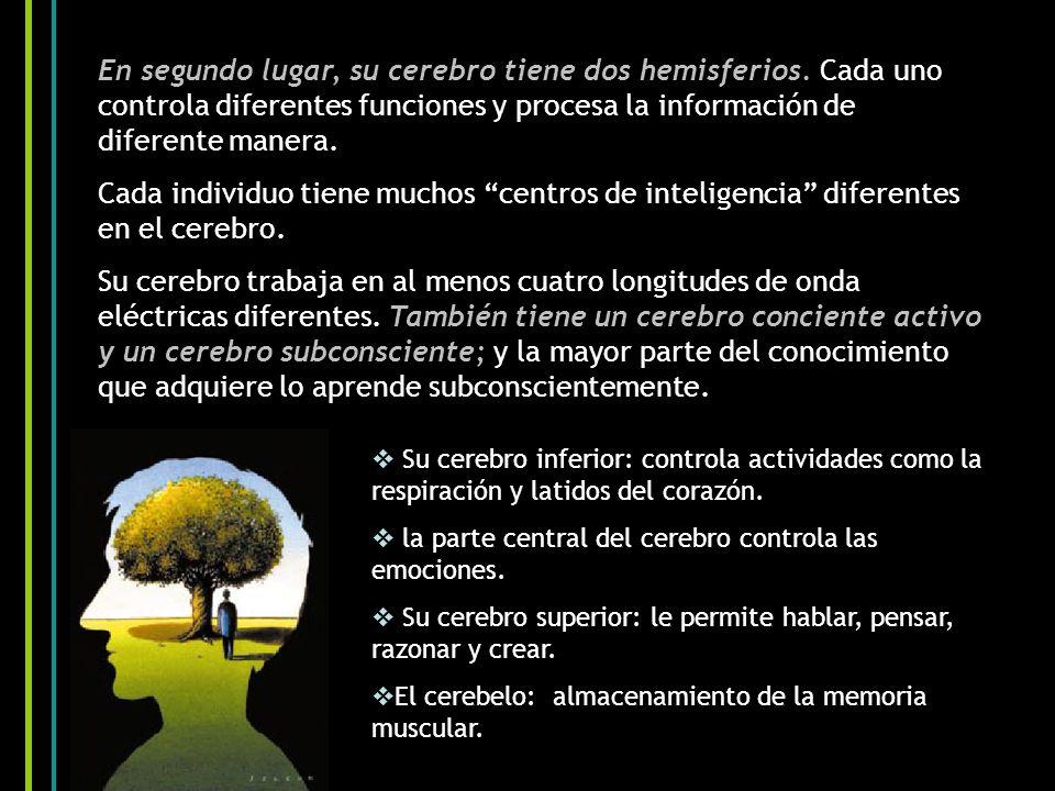 En segundo lugar, su cerebro tiene dos hemisferios. Cada uno controla diferentes funciones y procesa la información de diferente manera. Cada individu