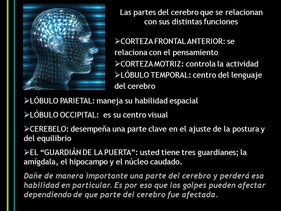 Las partes del cerebro que se relacionan con sus distintas funciones CORTEZA FRONTAL ANTERIOR: se relaciona con el pensamiento CORTEZA MOTRIZ: controla la actividad LÓBULO TEMPORAL: centro del lenguaje del cerebro LÓBULO PARIETAL: maneja su habilidad espacial LÓBULO OCCIPITAL: es su centro visual CEREBELO: desempeña una parte clave en el ajuste de la postura y del equilibrio EL GUARDIÁN DE LA PUERTA: usted tiene tres guardianes; la amígdala, el hipocampo y el núcleo caudado.