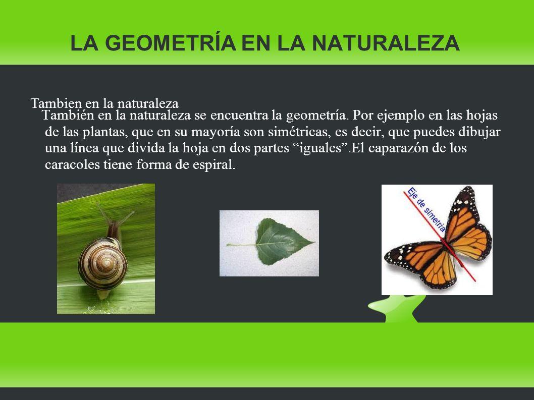 LA GEOMETRÍA EN LA NATURALEZA También en la naturaleza se encuentra la geometría. Por ejemplo en las hojas de las plantas, que en su mayoría son simét
