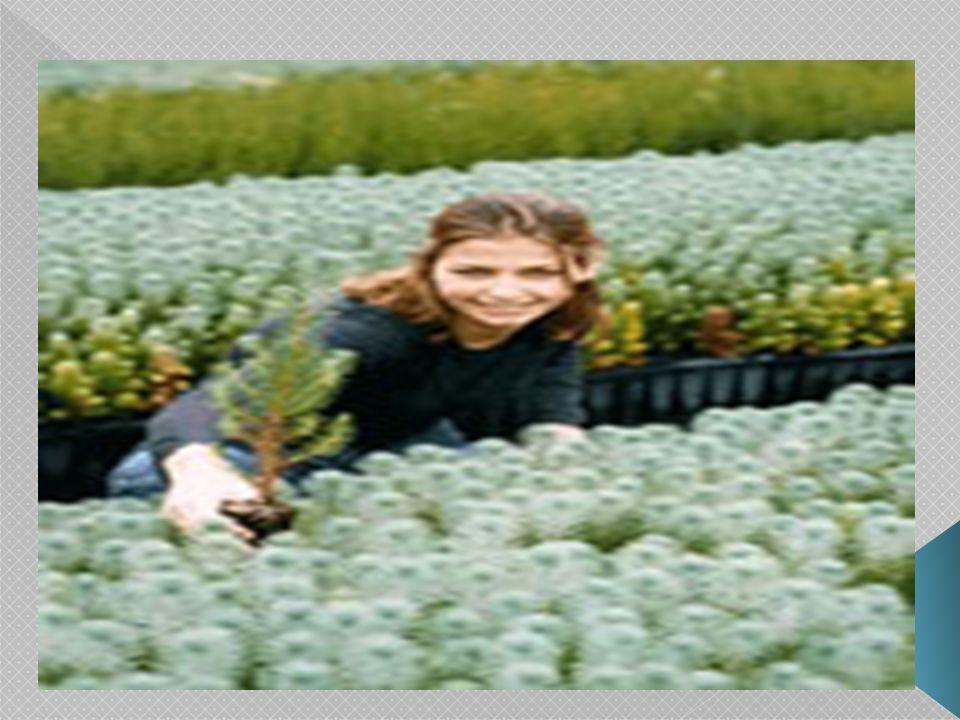 Un árbol requiere ser firmemente plantado y buenas raíces para que los vientos no los tumben: el hombre, con buenas bases, adecuados valores morales y espirituales que constituyen adecuados filtros y escudos para que nada ni nadie les pueda alterar sus rumbos.
