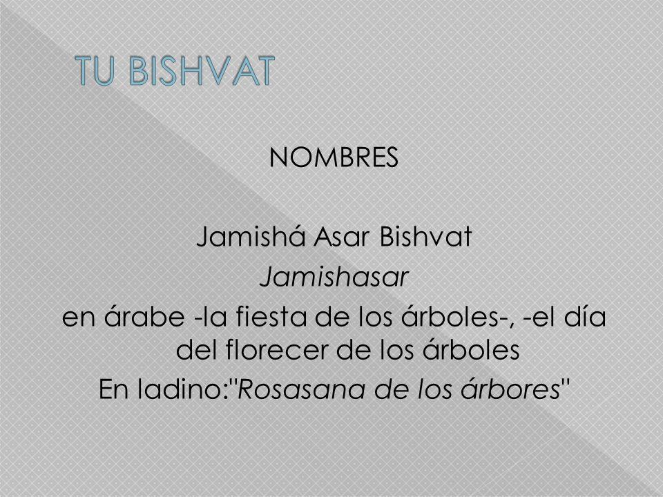 NOMBRES Jamishá Asar Bishvat Jamishasar en árabe -la fiesta de los árboles-, -el día del florecer de los árboles En ladino: