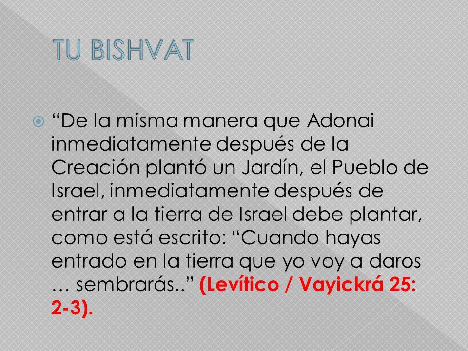 De la misma manera que Adonai inmediatamente después de la Creación plantó un Jardín, el Pueblo de Israel, inmediatamente después de entrar a la tierr