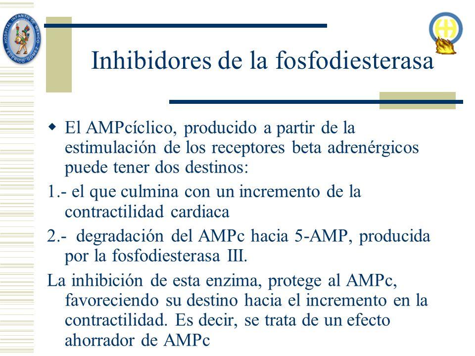 Inhibidores de la fosfodiesterasa El AMPcíclico, producido a partir de la estimulación de los receptores beta adrenérgicos puede tener dos destinos: 1.- el que culmina con un incremento de la contractilidad cardiaca 2.- degradación del AMPc hacia 5-AMP, producida por la fosfodiesterasa III.