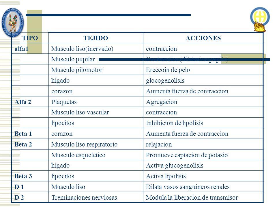 TIPOTEJIDOACCIONES alfa1Musculo liso(inervado)contraccion Musculo pupilarContraccion (dilatacion pupila) Musculo pilomotorEreccoin de pelo higadogloco