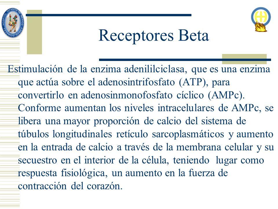 Receptores Beta Estimulación de la enzima adenililciclasa, que es una enzima que actúa sobre el adenosintrifosfato (ATP), para convertirlo en adenosinmonofosfato cíclico (AMPc).