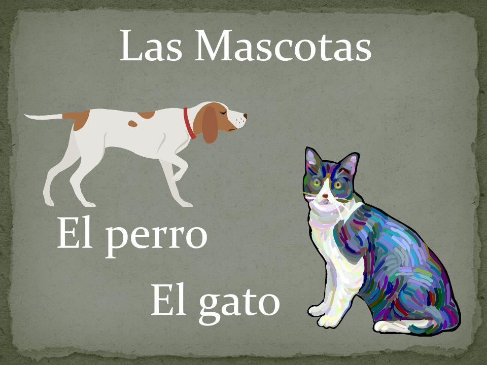 Las Mascotas El perro El gato