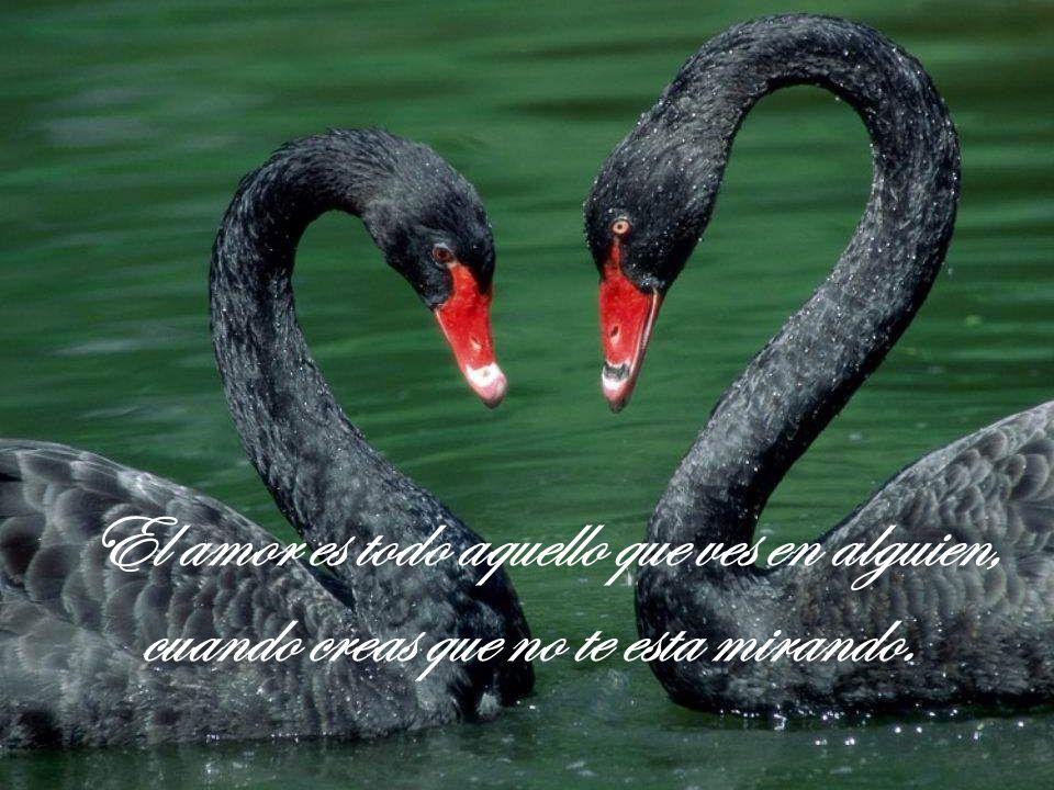 El amor es todo aquello que ves en alguien, cuando creas que no te esta mirando.