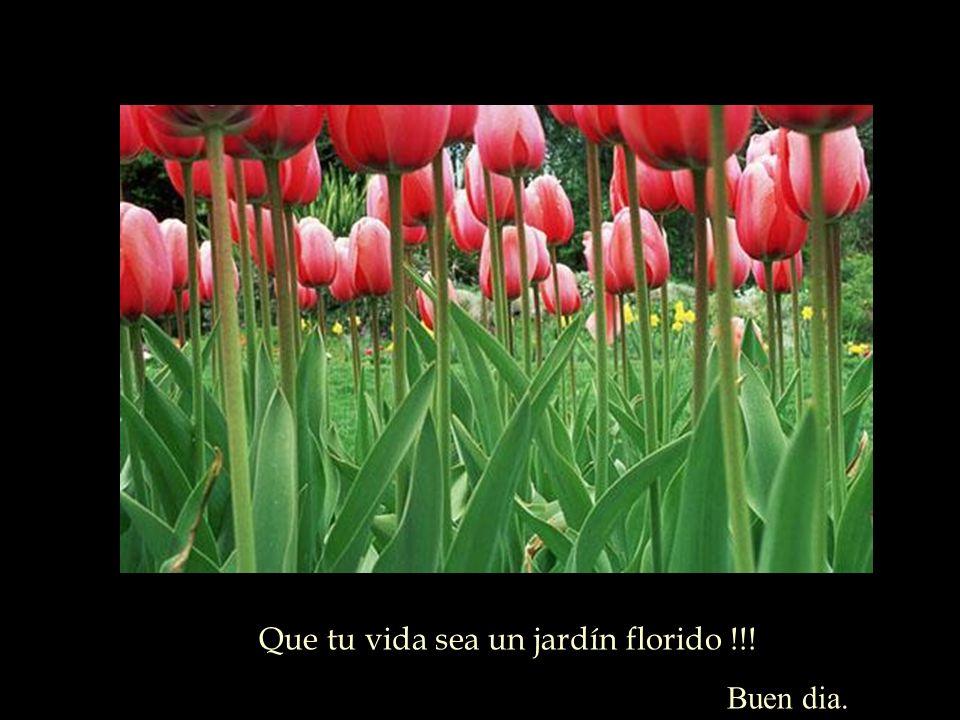 Que tu vida sea un jardín florido !!! Buen dia.