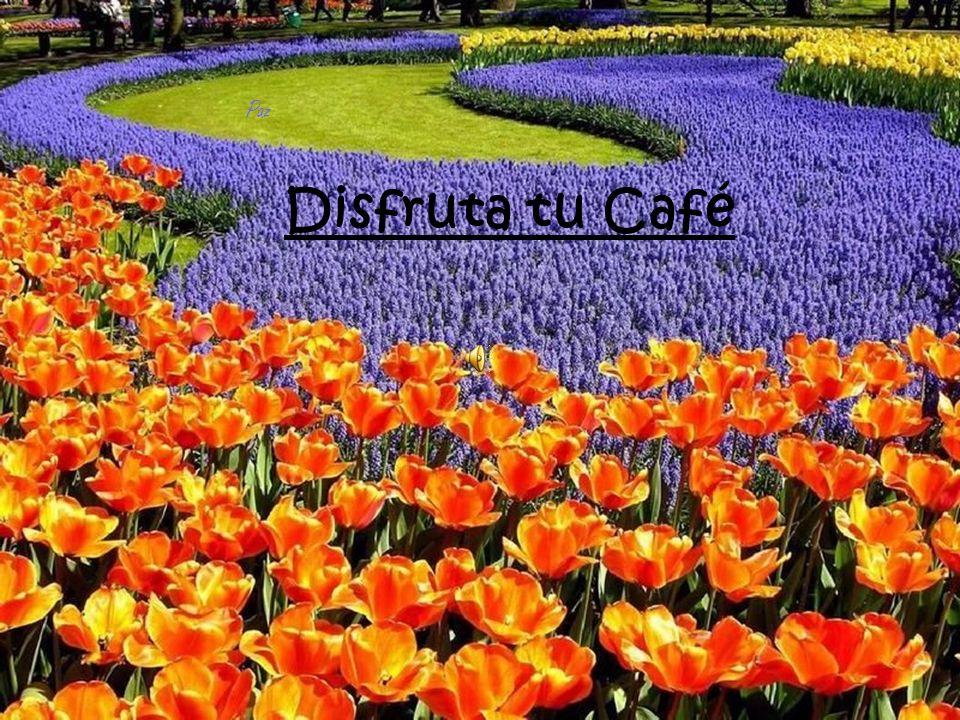 Ahora piensen en esto: La vida es como el café.