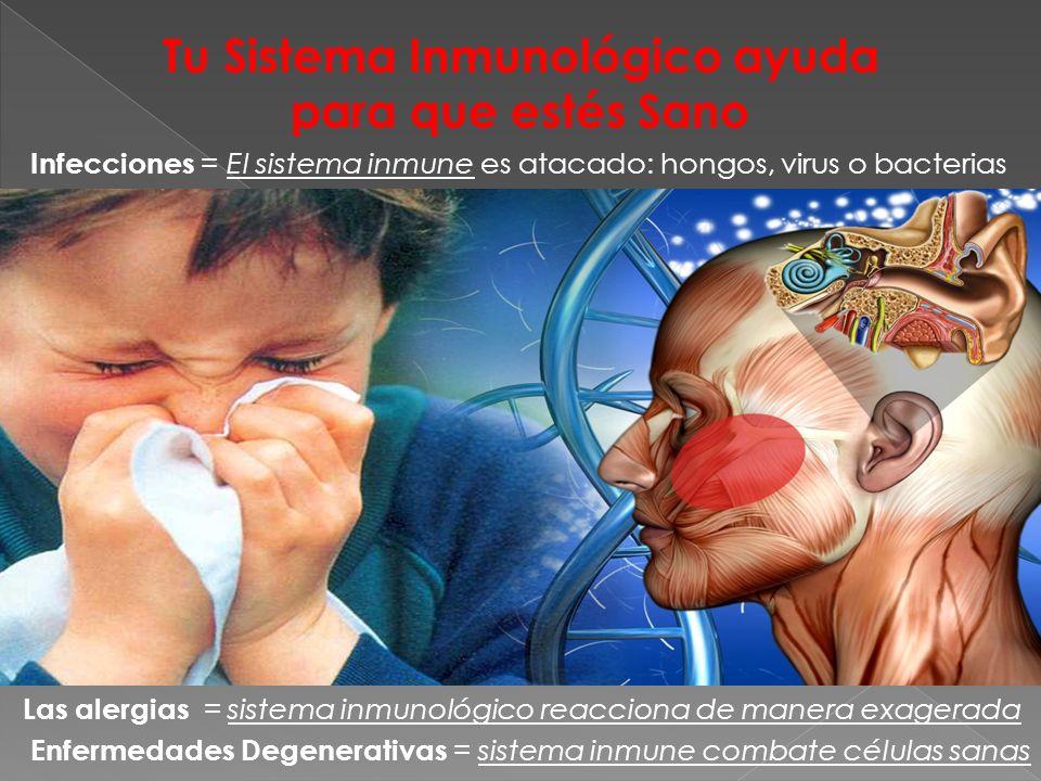 Tu Sistema Inmunológico ayuda para que estés Sano Infecciones = El sistema inmune es atacado: hongos, virus o bacterias Enfermedades Degenerativas = s