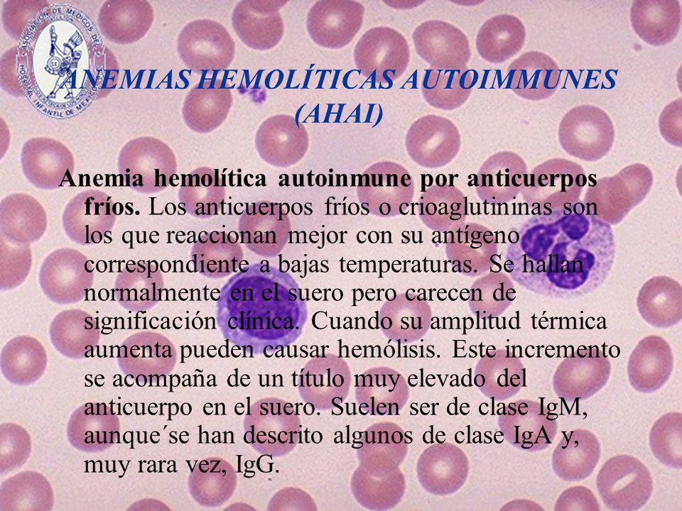 ANEMIAS HEMOLÍTICAS AUTOIMMUNES (AHAI) Anemia hemolítica autoinmune por anticuerpos fríos. Los anticuerpos fríos o crioaglutininas son los que reaccio