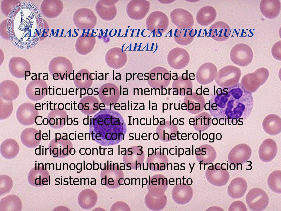 ANEMIAS HEMOLÍTICAS AUTOIMMUNES (AHAI) Para evidenciar la presencia de anticuerpos en la membrana de los eritrocitos se realiza la prueba de Coombs di