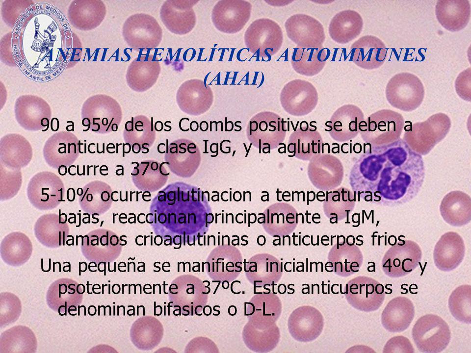 ANEMIAS HEMOLÍTICAS AUTOIMMUNES (AHAI) 90 a 95% de los Coombs positivos se deben a anticuerpos clase IgG, y la aglutinacion ocurre a 37ºC 5-10% ocurre
