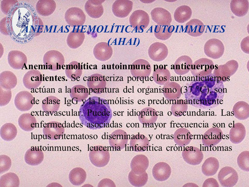 ANEMIAS HEMOLÍTICAS AUTOIMMUNES (AHAI) Anemia hemolítica autoinmune por anticuerpos calientes. Se caracteriza porque los autoanticuerpos actúan a la t