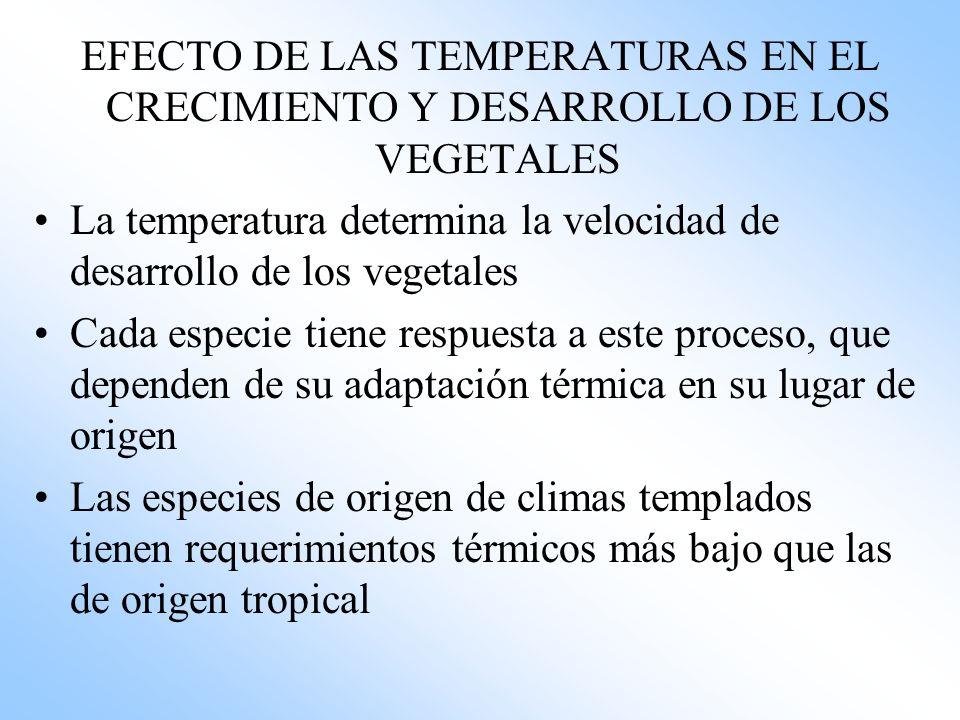 EFECTO DE LAS TEMPERATURAS EN EL CRECIMIENTO Y DESARROLLO DE LOS VEGETALES La temperatura determina la velocidad de desarrollo de los vegetales Cada e