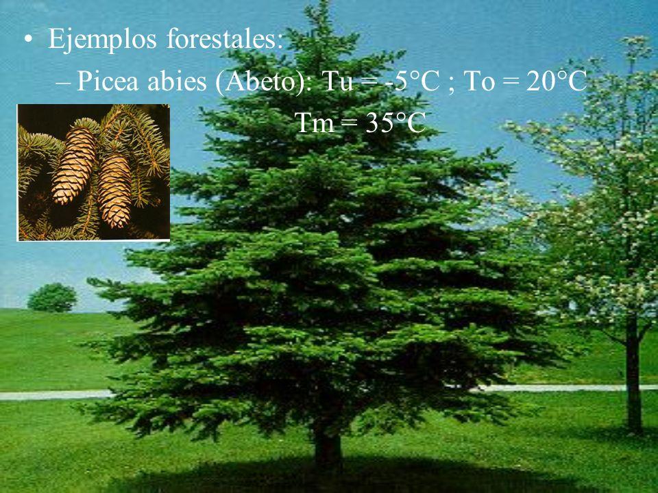 Ejemplos forestales: –Picea abies (Abeto): Tu = -5°C ; To = 20°C Tm = 35°C