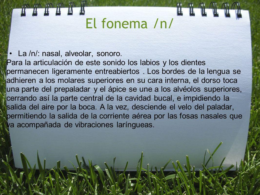 El fonema /n/ La /n/: nasal, alveolar, sonoro. Para la articulación de este sonido los labios y los dientes permanecen ligeramente entreabiertos. Los