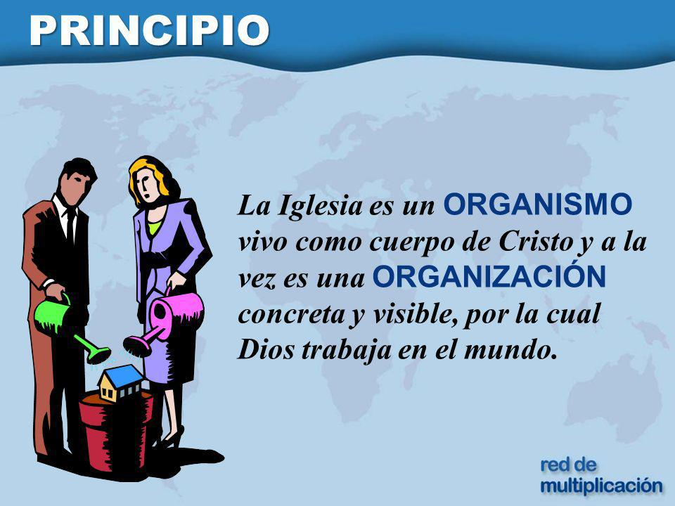 PRINCIPIO La Iglesia es un ORGANISMO vivo como cuerpo de Cristo y a la vez es una ORGANIZACIÓN concreta y visible, por la cual Dios trabaja en el mundo.