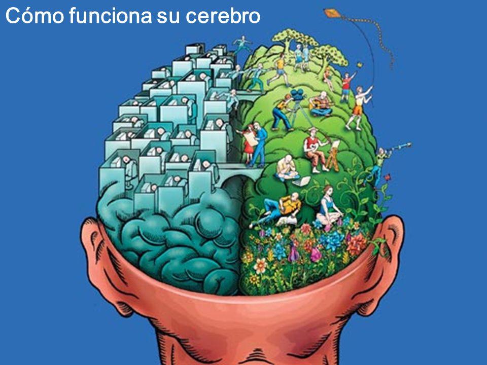 Cómo funciona su cerebro