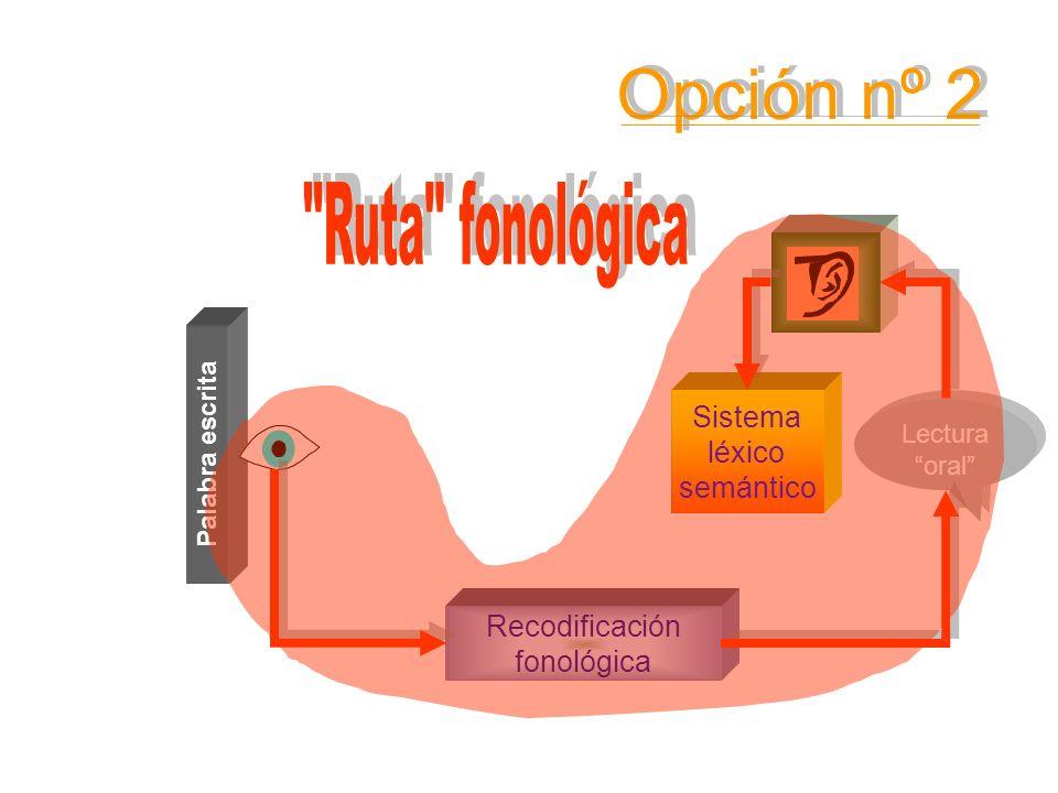 Sistema léxico semántico Palabra escrita Conocimiento de las RCGF Lectura oral Lectura oral Recodificación fonológica Opción nº 2