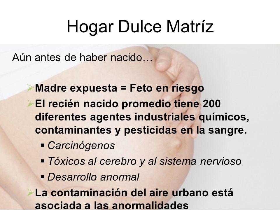 Hogar Dulce Matríz Aún antes de haber nacido… Madre expuesta = Feto en riesgo El recién nacido promedio tiene 200 diferentes agentes industriales quím
