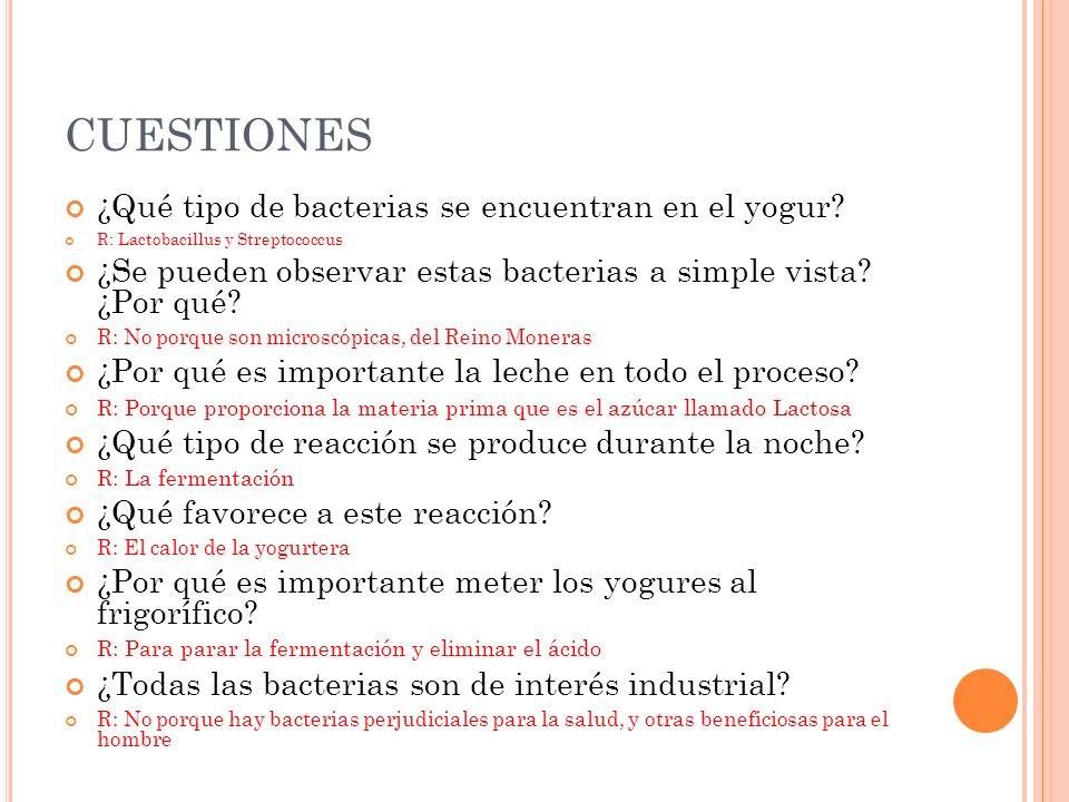 CUESTIONES ¿Qué tipo de bacterias se encuentran en el yogur? R: Lactobacillus y Streptococcus ¿Se pueden observar estas bacterias a simple vista? ¿Por