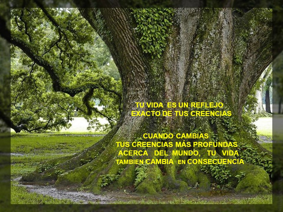 TU VIDA ES UN REFLEJO EXACTO DE TUS CREENCIAS CUANDO CAMBIAS TUS CREENCIAS MÁS PROFUNDAS.