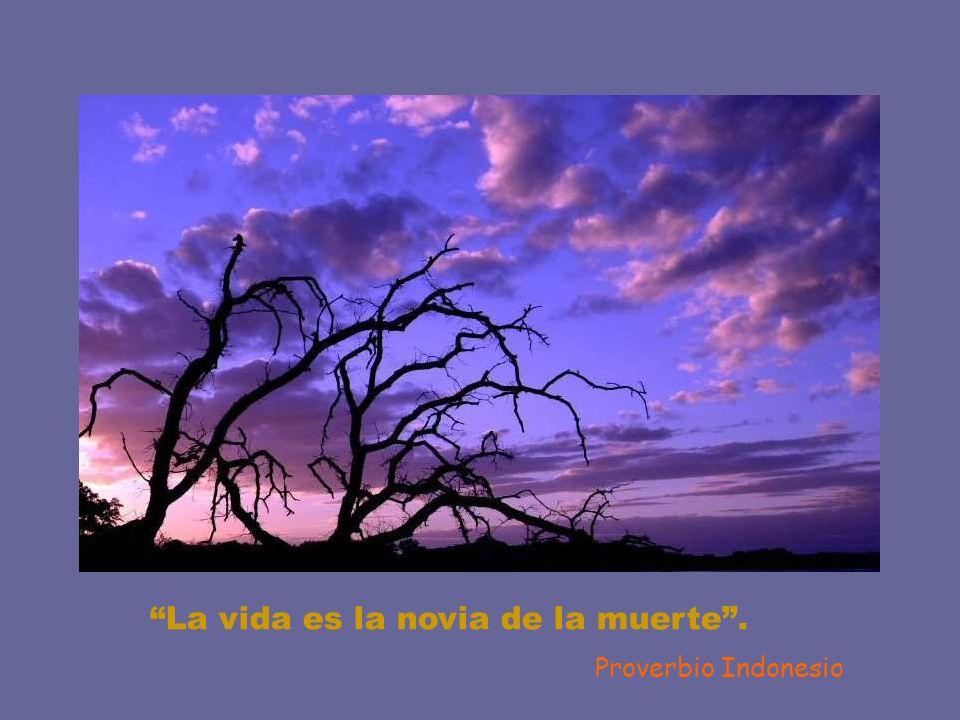 Creo que si miras al cielo acabarás por tener alas. Gustave Flaubert