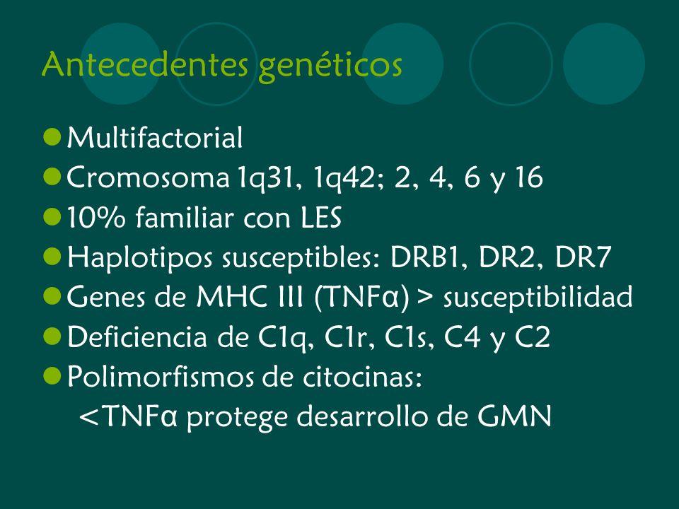 Antecedentes genéticos Multifactorial Cromosoma 1q31, 1q42; 2, 4, 6 y 16 10% familiar con LES Haplotipos susceptibles: DRB1, DR2, DR7 Genes de MHC III