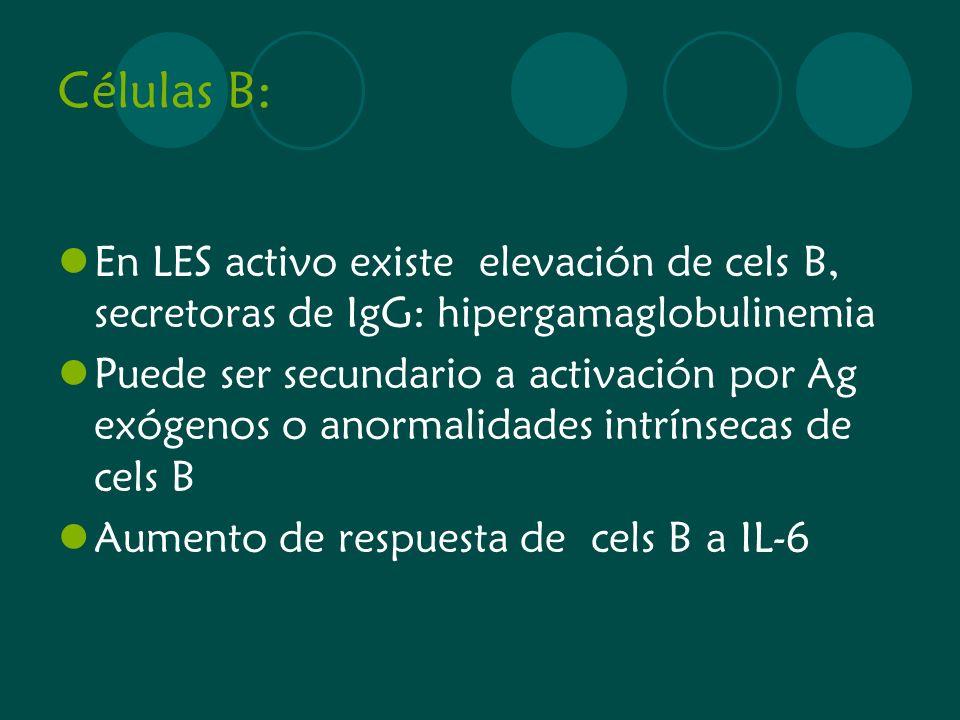 Células B: En LES activo existe elevación de cels B, secretoras de IgG: hipergamaglobulinemia Puede ser secundario a activación por Ag exógenos o anor