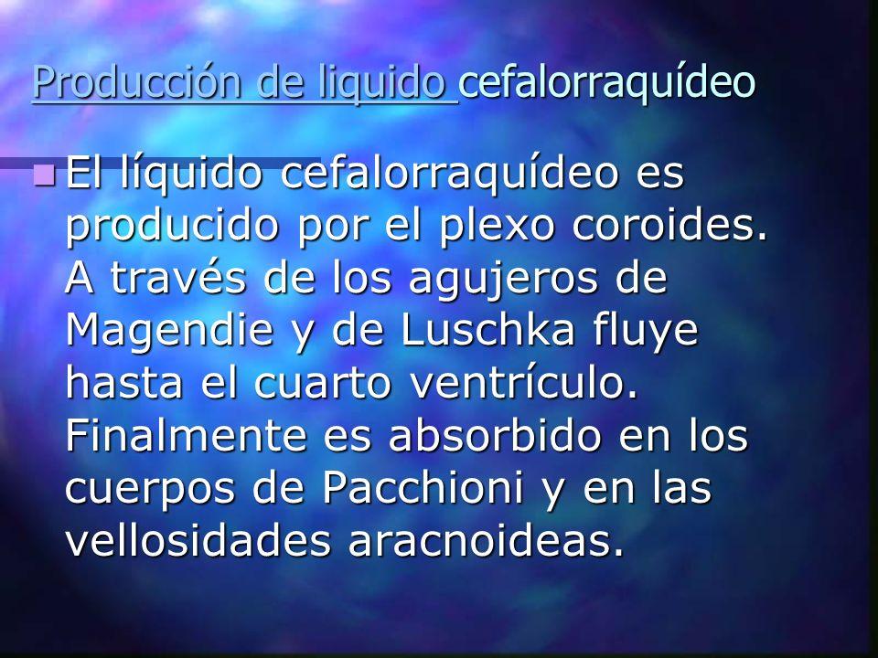 Producción de liquido Producción de liquido cefalorraquídeo Producción de liquido El líquido cefalorraquídeo es producido por el plexo coroides. A tra
