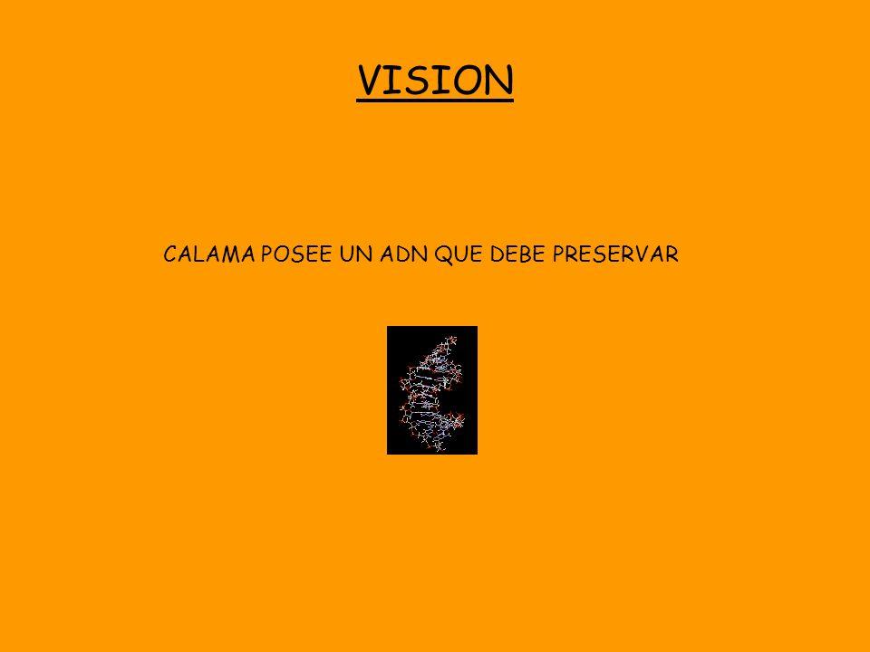 VISION CALAMA POSEE UN ADN QUE DEBE PRESERVAR