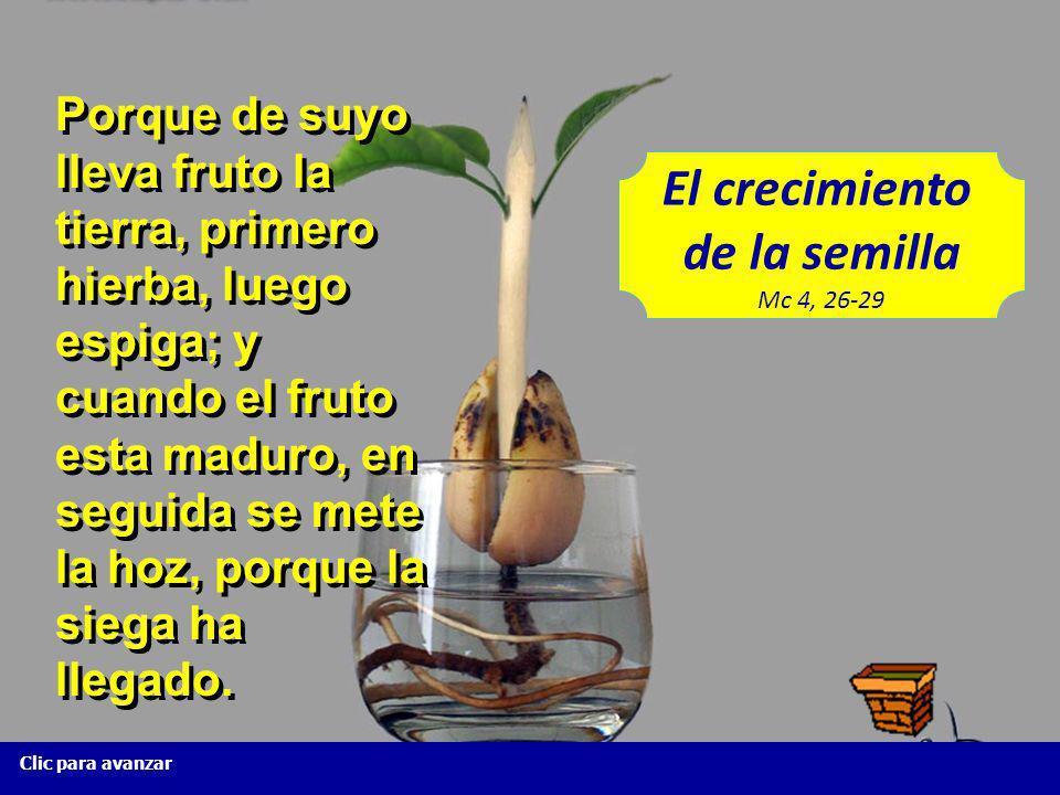 El crecimiento de la semilla Mc 4, 26-29 Clic para avanzar Así es el Reino de Dios, como cuando un hombre echa semilla en la tierra; y duerme y se lev