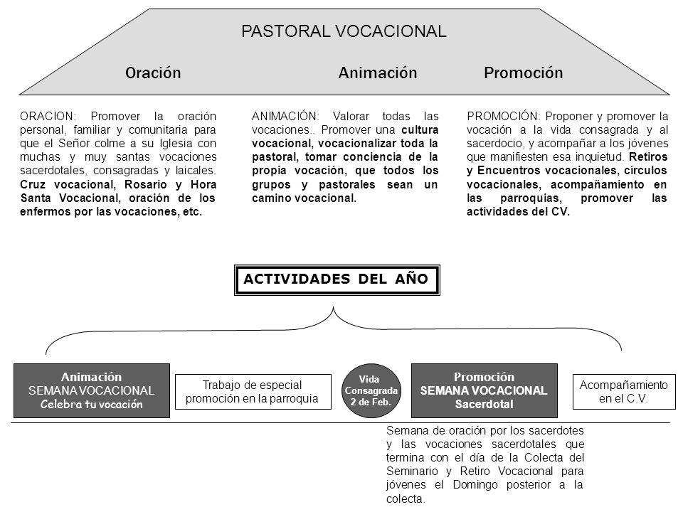 Animación SEMANA VOCACIONAL Celebra tu vocación PASTORAL VOCACIONAL Oración Animación Promoción ORACION: Promover la oración personal, familiar y comu