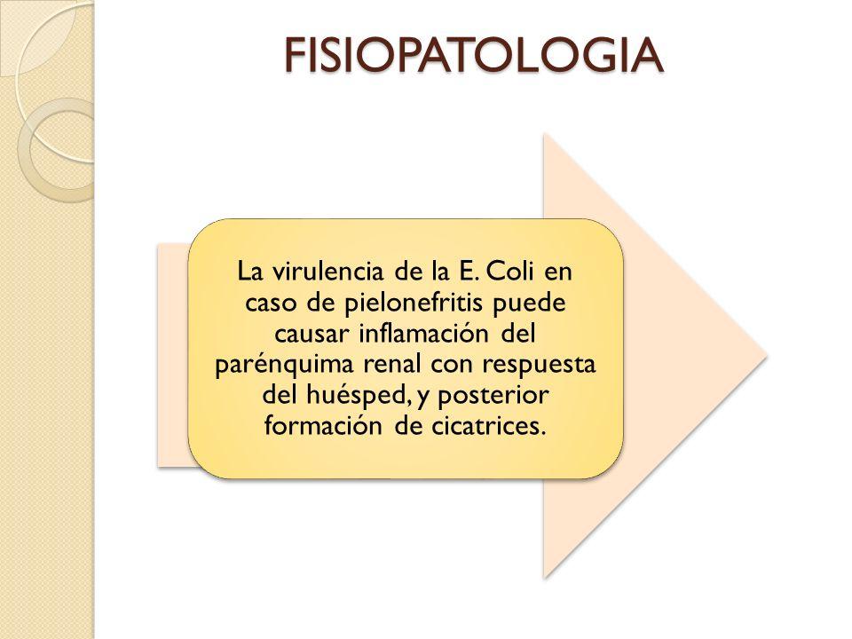 FISIOPATOLOGIA La virulencia de la E.