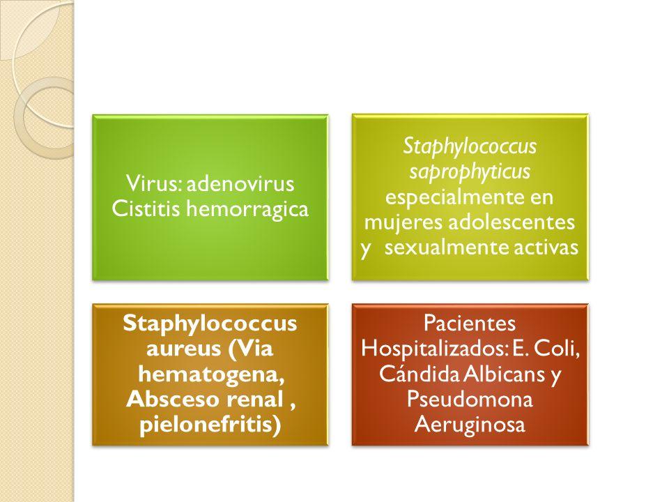 Virus: adenovirus Cistitis hemorragica Staphylococcus saprophyticus especialmente en mujeres adolescentes y sexualmente activas Staphylococcus aureus (Via hematogena, Absceso renal, pielonefritis) Pacientes Hospitalizados: E.