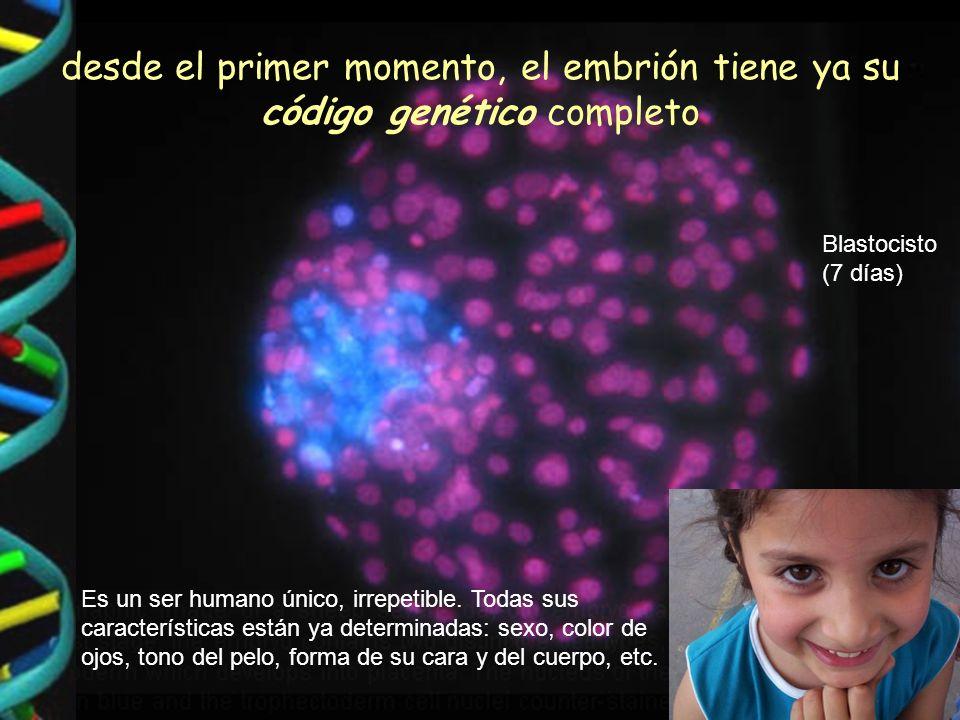 desde el primer momento, el embrión tiene ya su código genético completo Es un ser humano único, irrepetible.
