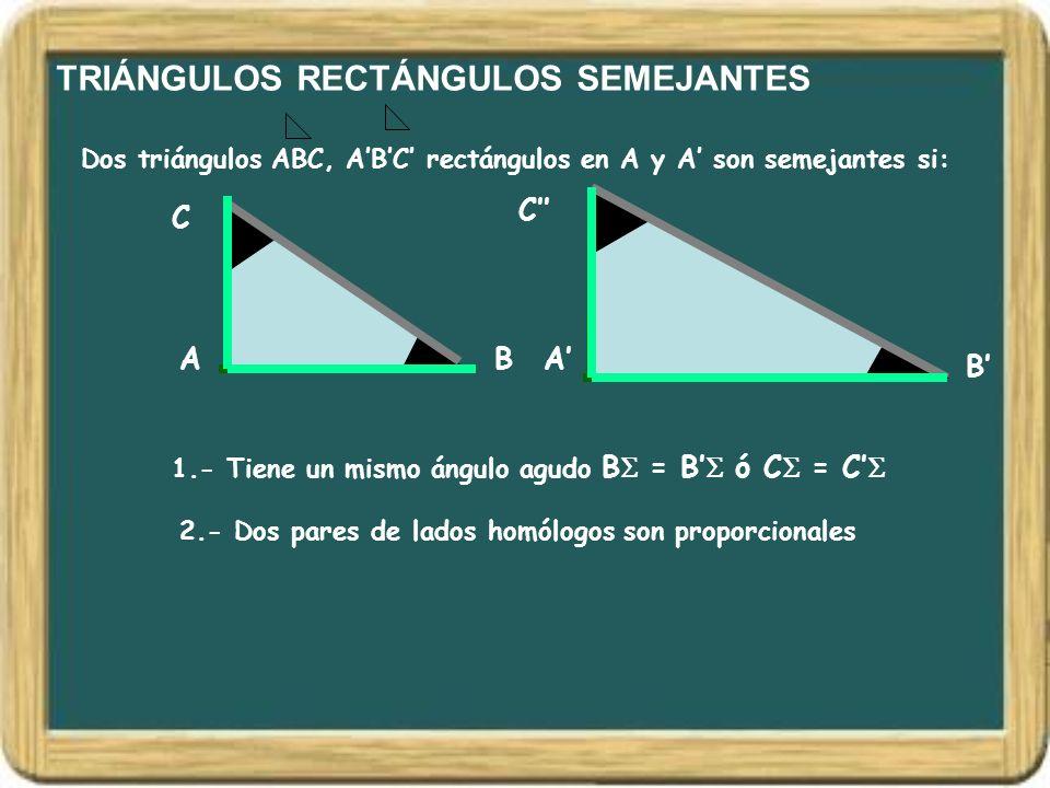 TRIÁNGULOS RECTÁNGULOS SEMEJANTES Dos triángulos ABC, ABC rectángulos en A y A son semejantes si: AB C A B C 1.- Tiene un mismo ángulo agudo B = B ó C
