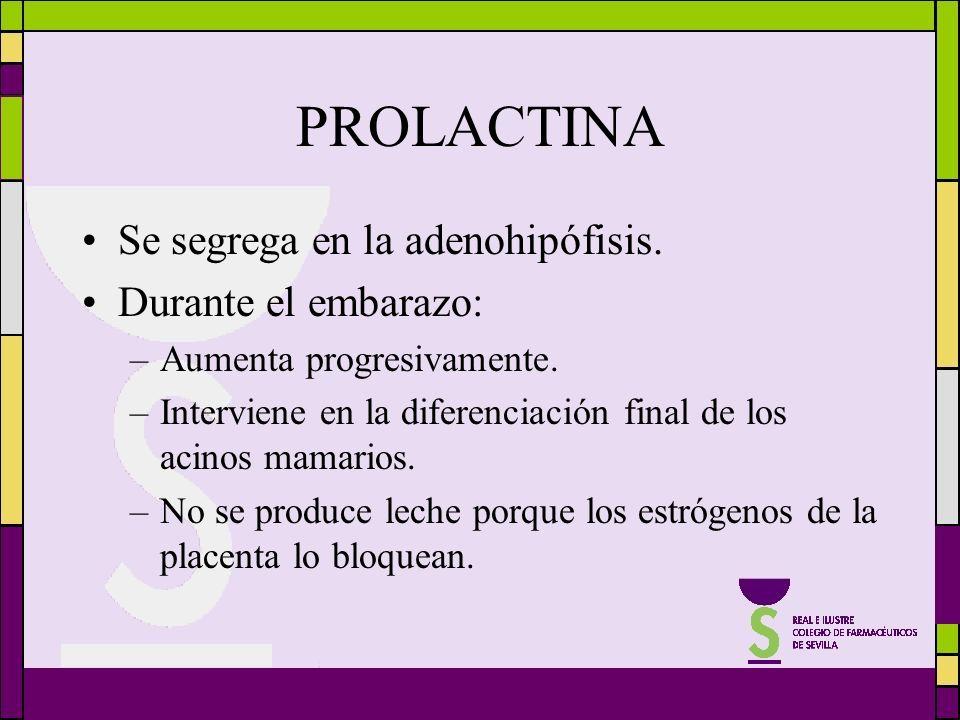 PROLACTINA Se segrega en la adenohipófisis. Durante el embarazo: –Aumenta progresivamente. –Interviene en la diferenciación final de los acinos mamari