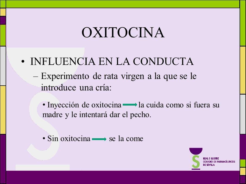 OXITOCINA INFLUENCIA EN LA CONDUCTA –Experimento de rata virgen a la que se le introduce una cría: Inyección de oxitocina la cuida como si fuera su ma
