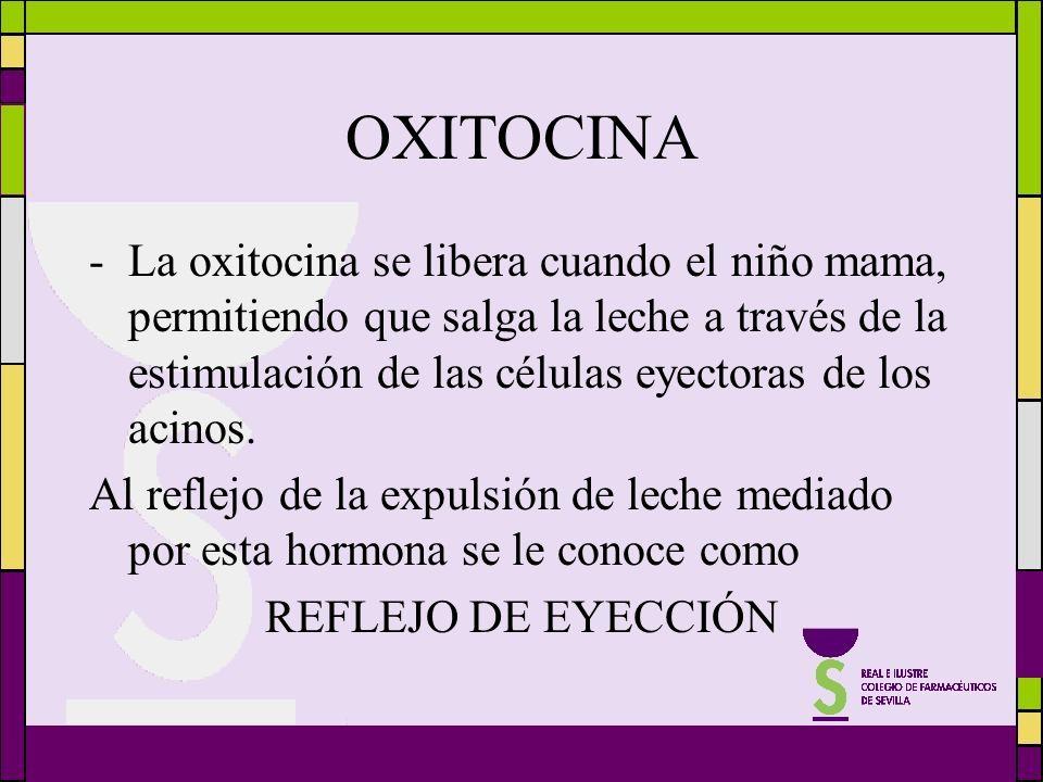 OXITOCINA -La oxitocina se libera cuando el niño mama, permitiendo que salga la leche a través de la estimulación de las células eyectoras de los acin