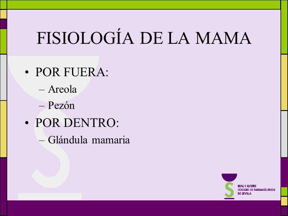 FISIOLOGÍA DE LA MAMA POR FUERA: –Areola –Pezón POR DENTRO: –Glándula mamaria